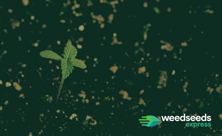 Looking for the best soil to grow weed? Check this blog!