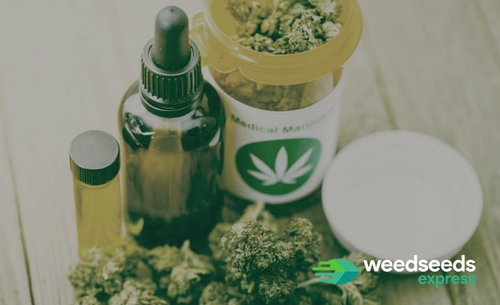 Looking for the best strains for CBD oil? Read this blog!