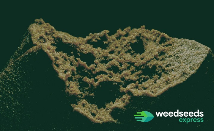 The best strains for the production of Hash!
