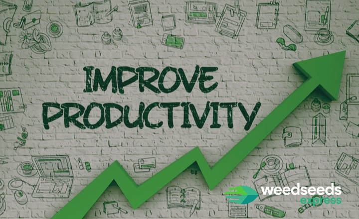 Curious to the best strains for productivity? Check it out!
