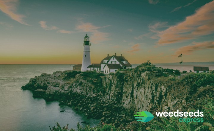 Top 5 - Best strains to grow in Maine