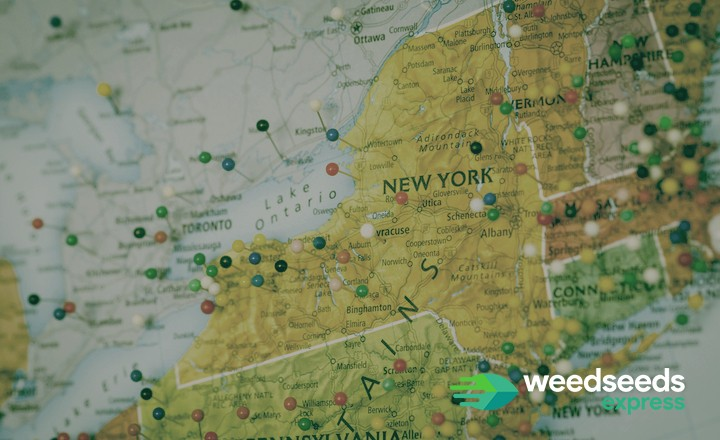 Best strains to grow in New York