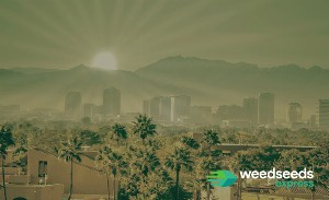 Top 5 Best strains to grow outdoors in Arizona