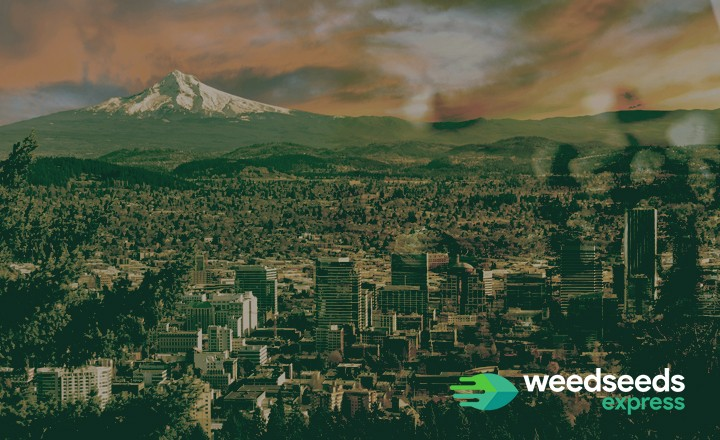 Want to buy marijuana seeds in oregon? This is what you should know!