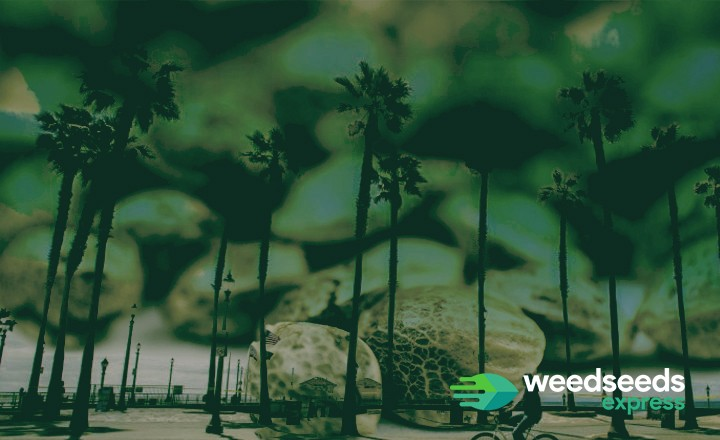 Want to buy cannabis seeds in California? This is what you need to know!