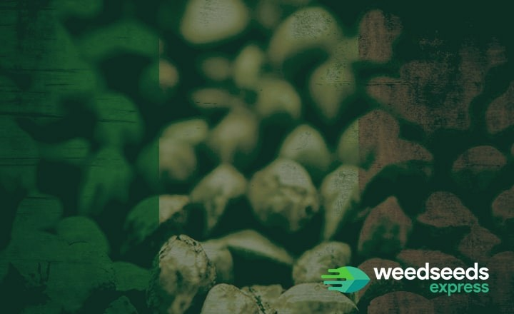 Everything you need to know about cannabis seeds Ireland