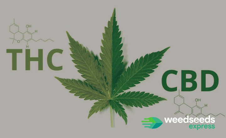 CBD vs THC: what is the difference?