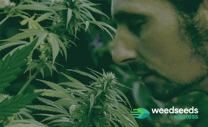 Does growing weed smell?