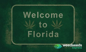 All you should know about: Growing marijuana in Florida