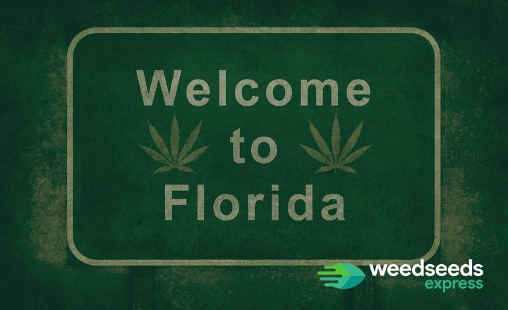 Want to grow weed in Florida? Read this first!