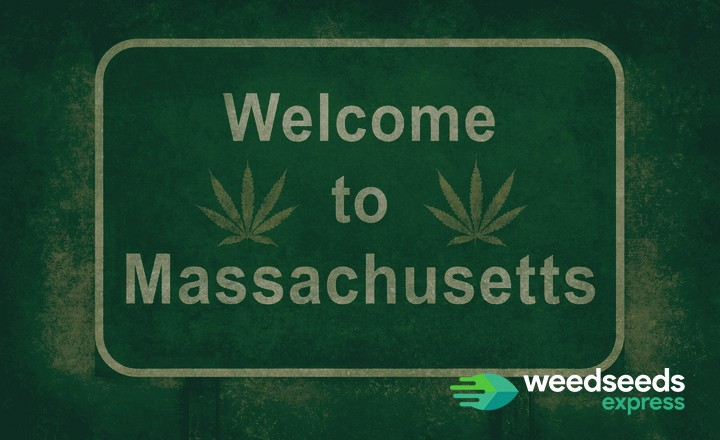 What you need to know about growing marijuana in Massachusetts