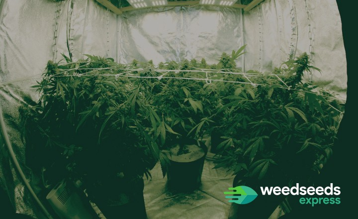 Want to grow weed in your apartment? Check this blog!