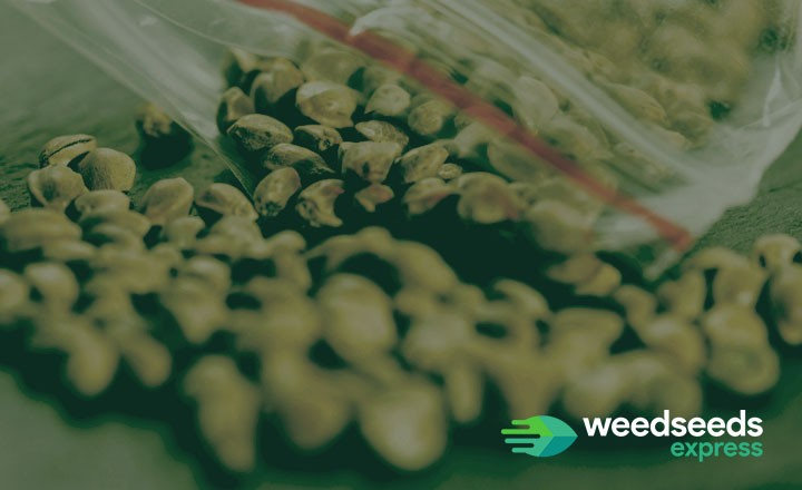 Curious how long weed seeds last? Check it out!