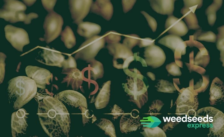 How much do weed seeds cost? Check out this blog