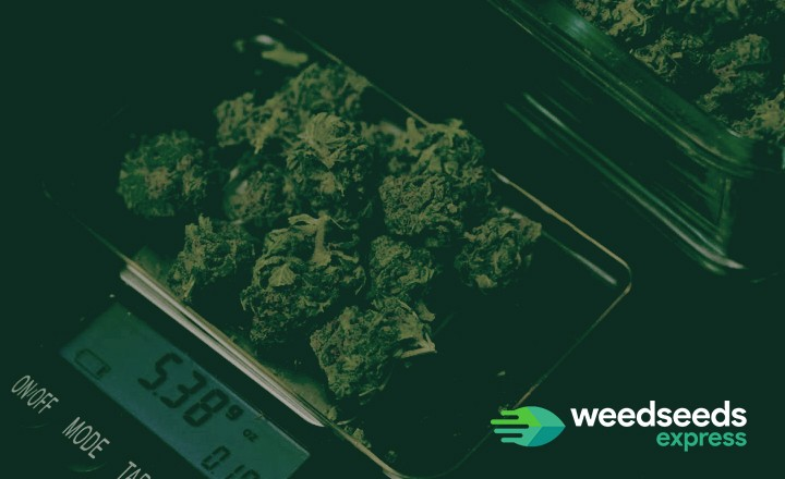 How much weed does one plant yield? Check it out!