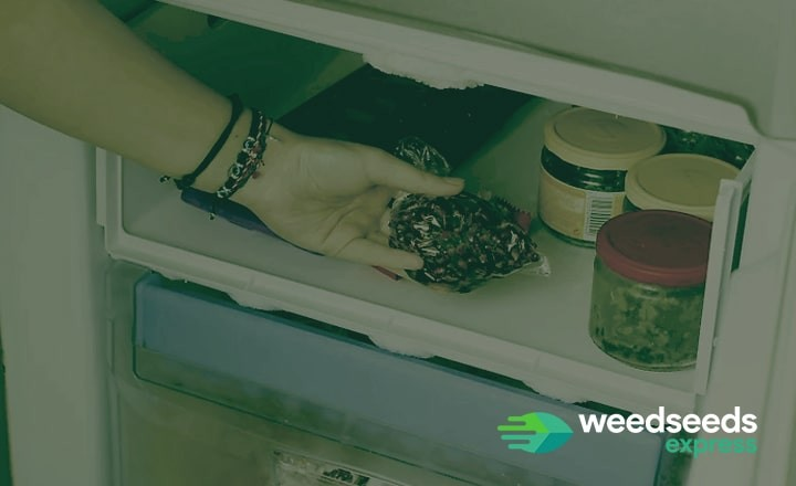 How to store your weed seeds properly? Read our blog!