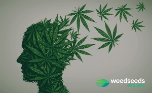 What are the differences: Indica vs Sativa effects