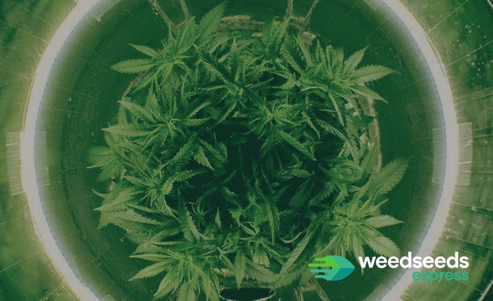 Curious how to grow in a space bucket? Check it out!