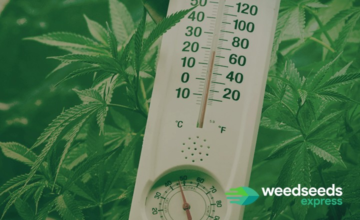 Read everything about the best temperature and humidity for growing weed