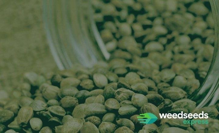 Read this blog about the appearance of a healthy cannabis seed