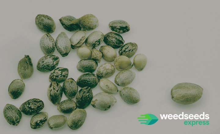Curious what to do with Weed seeds? Check it out!