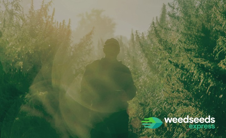 Where does weed grow naturally? Check it out!