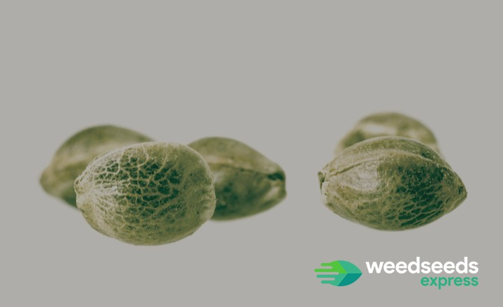 This is what you should know about white weed seeds