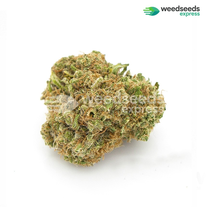 Blue Cheese autoflowering feminized seeds bud