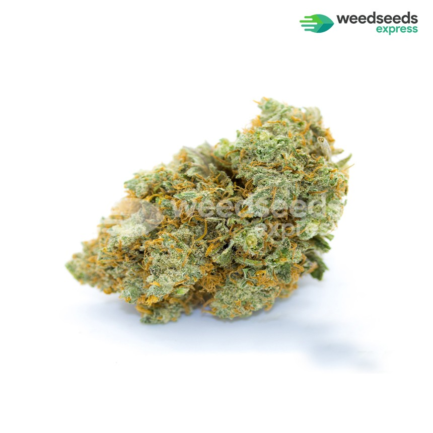 Bubblegum regular seeds bud