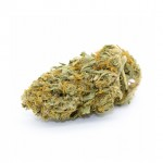 Cheese feminized seeds bud thumbnail