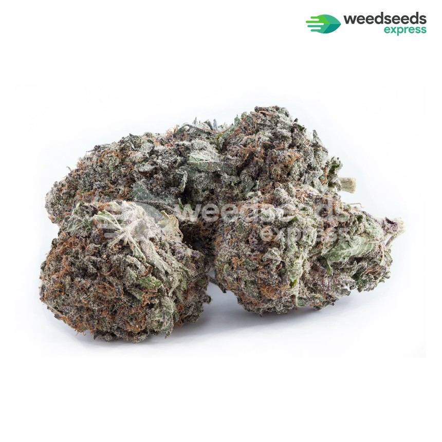 Durban Poison feminized seeds bud