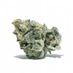 Girl Scout Cookies feminized seeds bud thumbnail