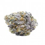 Granddaddy Purple feminized seeds bud thumbnail