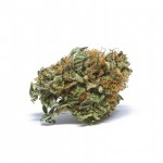 Master Kush regular seeds bud thumbnail