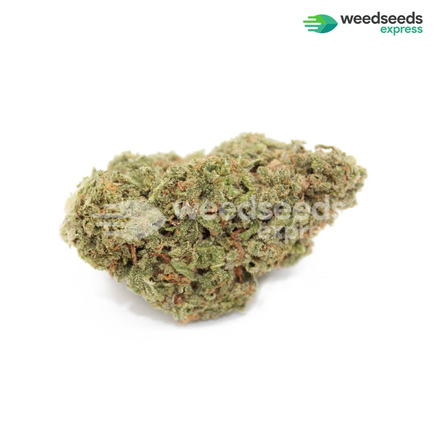 Power Plant regular seeds bud