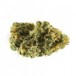 Skywalker OG feminized seeds bud thumbnail
