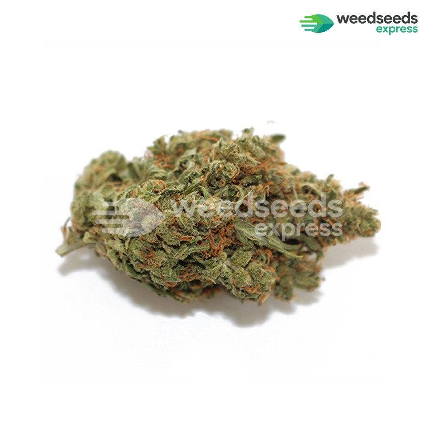 Somango feminized seeds bud