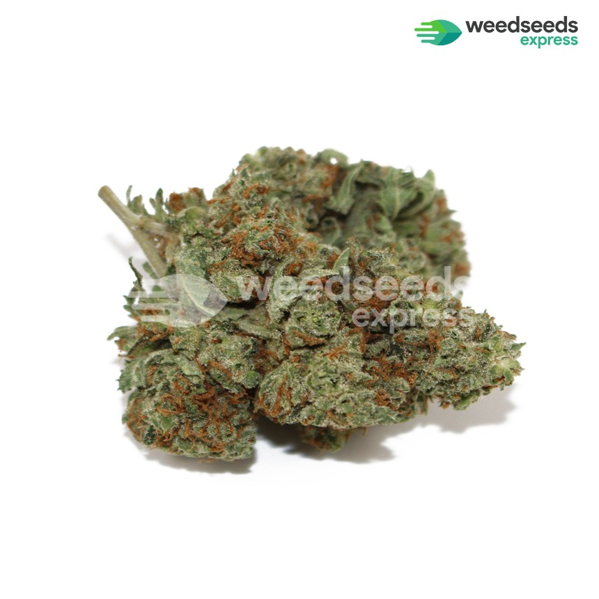 Sour Diesel feminized seeds bud