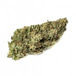 White Russian feminized seeds bud thumbnail
