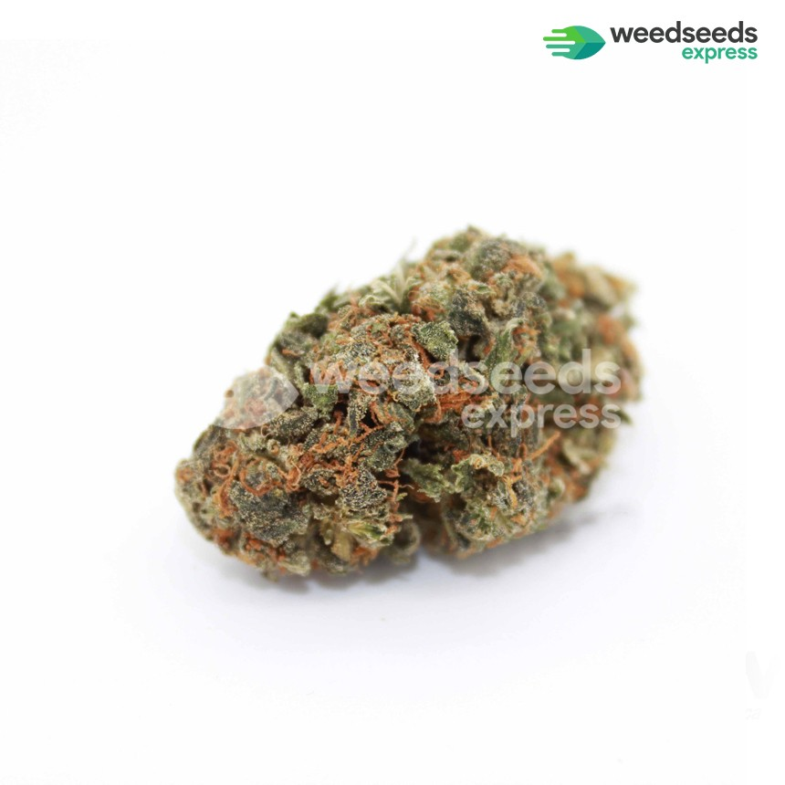 White Widow feminized seeds bud